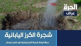 أمانة بغداد تشرع بحملة لزراعة شجرة الكرز اليابانية في شارع المطار
