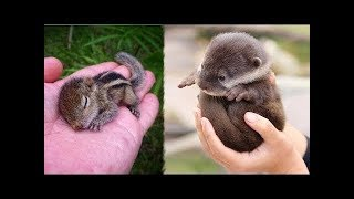 Super Cute Animals | Funny and Cute Animal Videos Compilation (2019) Animales Adorables Videos #8