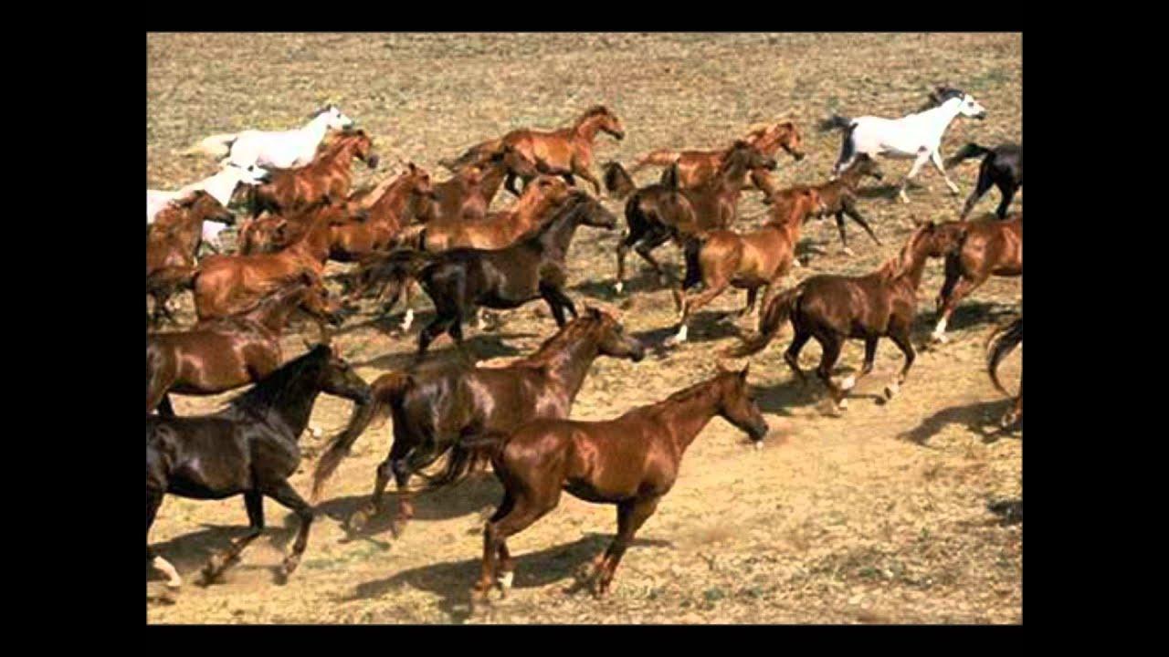 Le grand galop de bbl youtube - Grand galop le cheval volant ...