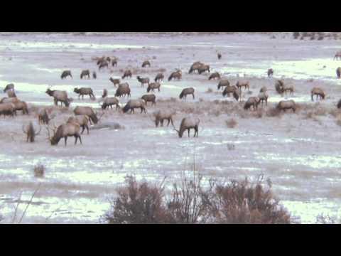 Top Elk Hunting Destination: Elk Hunting Montana