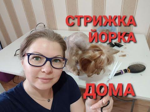 СТРИЖКА ЙОРКА ДОМА/ Я НЕ МАСТЕР/ СТРИГУ САМА/ СЕМЬЯ ИЗ САМАРЫ