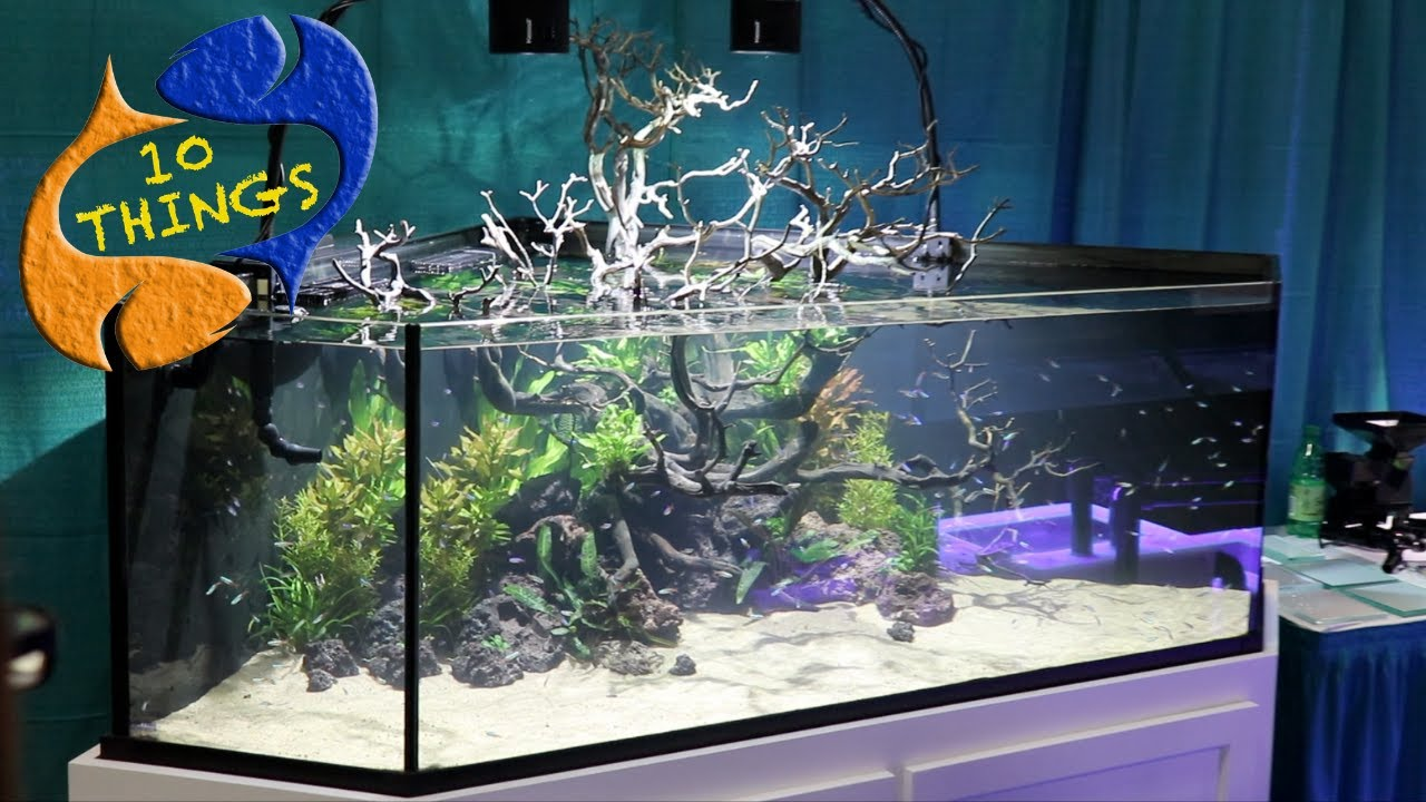 Top 10 Things About Aquariums! Everyone Buying An Aquarium Should Watch. -  YouTube