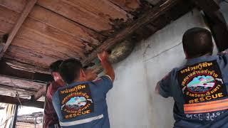 Un lézard géant coincé dans une maison