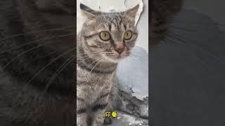 China's cute little animals lihua cat