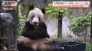 子と孫が153頭も・・・世界最高齢のパンダ「新星」死ぬ(2020年12月22日) - YouTube
