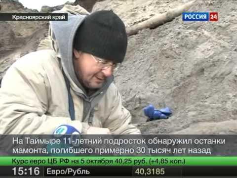 На Таймыре обнаружили останки мамонта.