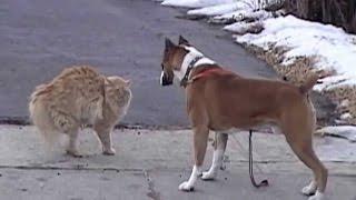 смешные кошки и коты поединок