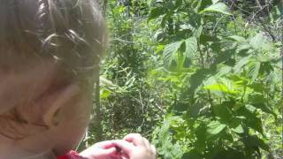 How To Pick And Bake A Wild Blackberrie Pie