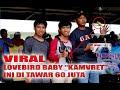 Galamediacup Berhasil Juara  Di Event Nasional Lovebird Baby  Kampret  Ditawar  Juta  Mp3 - Mp4 Download
