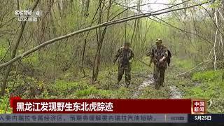 [中国新闻]黑龙江发现野生东北虎踪迹| CCTV中文国际