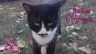 Этого кота зовут Китлер. Не знаю почему )This cat's name is Kitler. I don't know why )