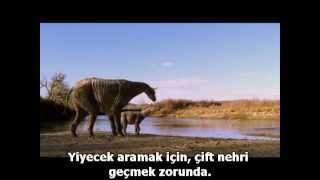 Indricotherium Paraceratherium .
