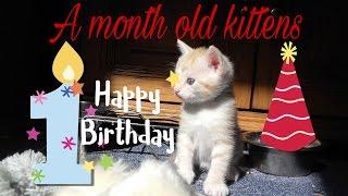 Забавные котята,1 месяц.