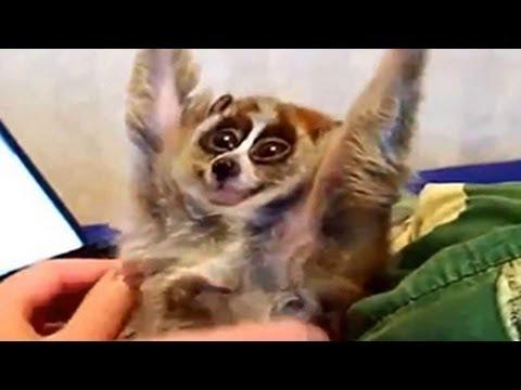 Célèbre Drôle exotique bébés animaux Compilation 2014 - YouTube LQ96