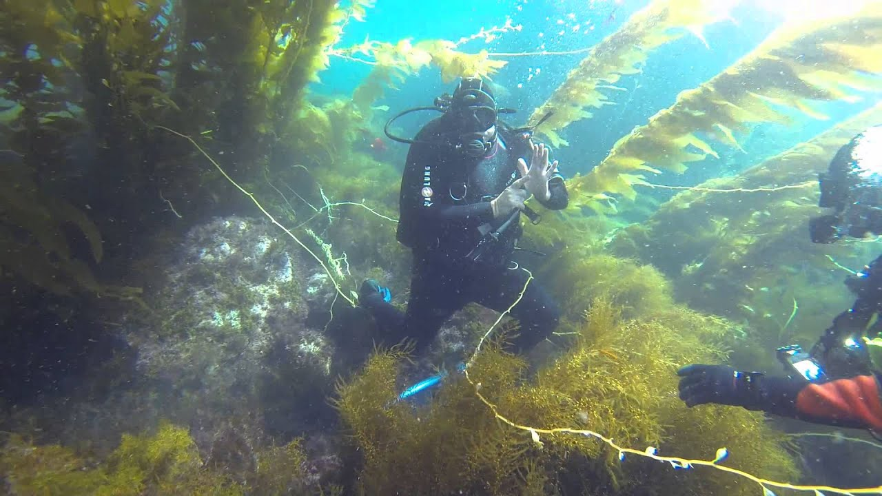 How to sign your air pressure underwater Scuba Diving