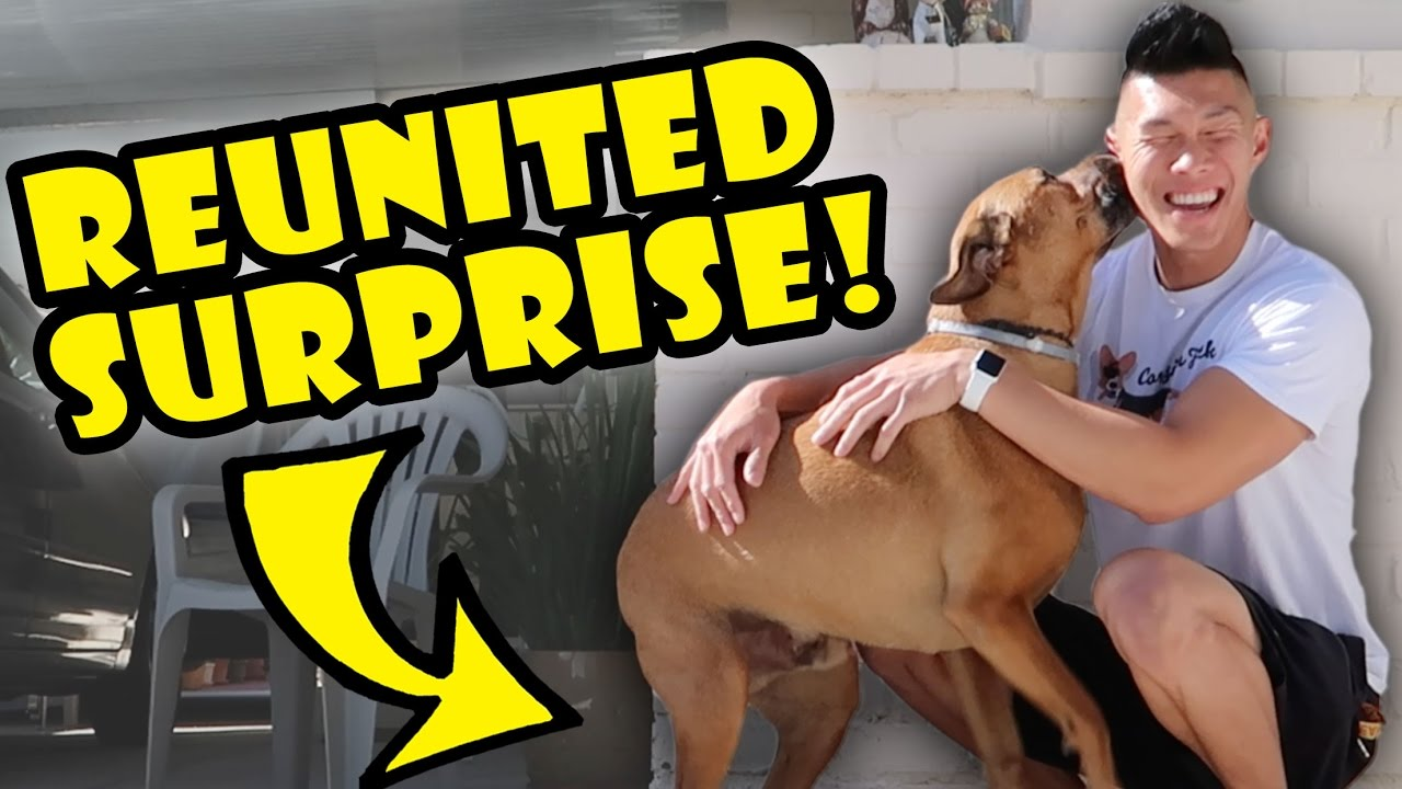 dog-reunited-surprise-after-1-yr-apart-life-after-college-ep-545