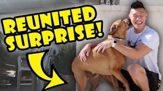 DOG REUNITED SURPRISE AFTER 1 YR APART || Life After College: Ep. 545 thumbnail