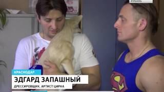 Братья Запашные помогут бездомным животным в Краснодаре