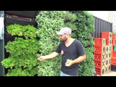 Wall Garden Vertical Garden Installation Operation YouTube
