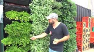 Wall Garden | Vertical Garden Installation & Operation