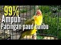Pancingan Masteran Lovebird Balibu Paud Cepat Ngekek Jeda Rapet Ngetik Gacor  Mp3 - Mp4 Download