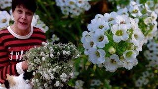 видео Цветы и травы