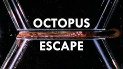 Octopuses are the World