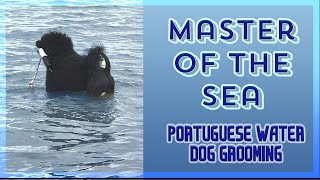 "Best Lion Trim Portuguese water dog tutorial from beginner to professional.""commercial trim"""