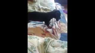 щенок такси играєтса(, 2014-10-17T13:35:53.000Z)