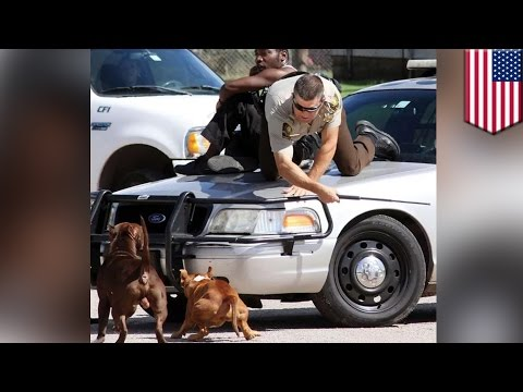 Pit bulls attack cop: Deputy uses his baton to protect man from snarling pit bulls - TomoNews