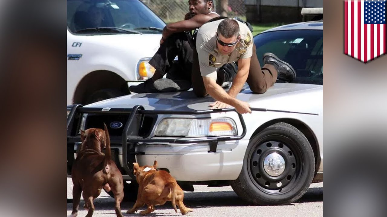 Pit bulls attack cop Deputy uses his baton to protect man