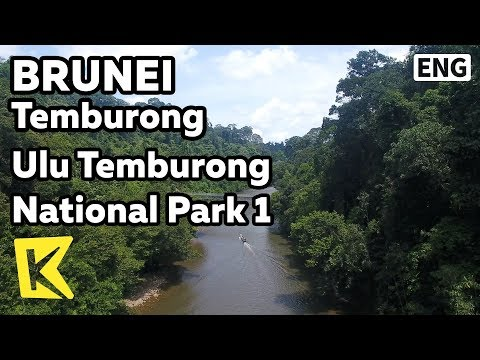 【K】Brunei Travel-Temburong[브루나이 여행-템부롱]울루 템부롱 국립공원 1/Ulu Temburong National Park/Jetty/Boat/Jungle