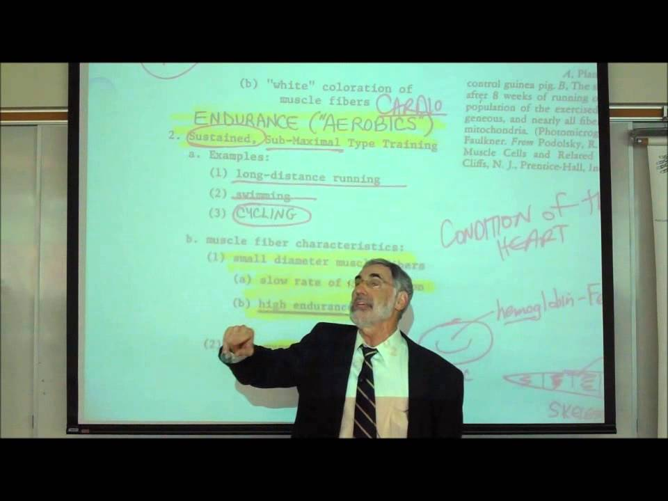 ANATOMY; MYOLOGY; PART 2; POWER vs ENDURANCE & LEVER SYSTEMS by ...