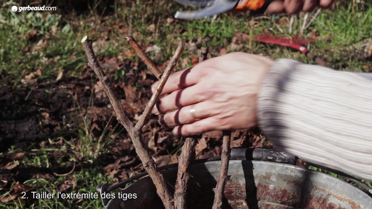 Planter des framboisiers à racines nues - YouTube