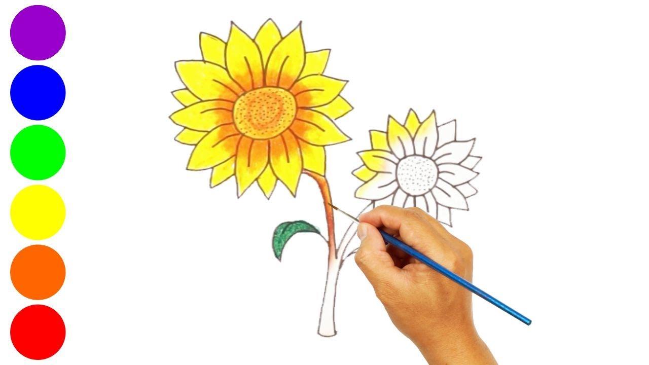 Menggambar Dan Mewarnai Bunga Matahari