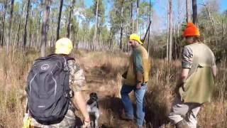 QUAIL HUNT with German Shorthaired Pointer | AR Outdoors