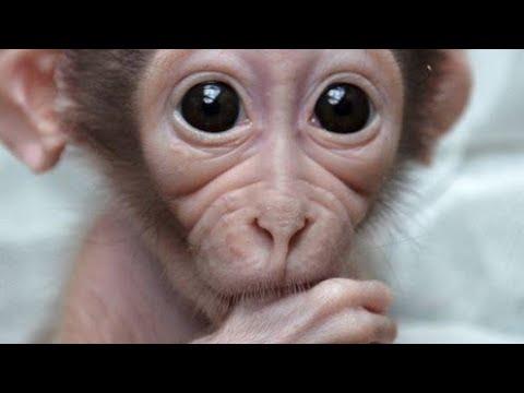 cute baby monkey bath