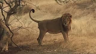 Ambardi safari park,dhari,gujarat price list