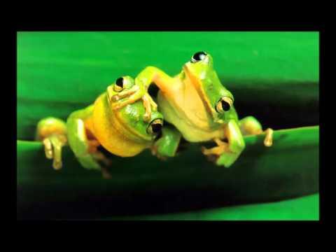 Worksheet. Metamorfosis de la rana para nios  YouTube