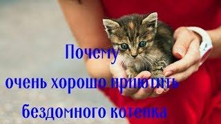 Почему очень хорошо приютить бездомного котенка Why it is very good to shelter a homeless kitten