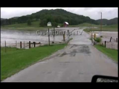 COWS CAUGHT IN FLASH FLOOD!