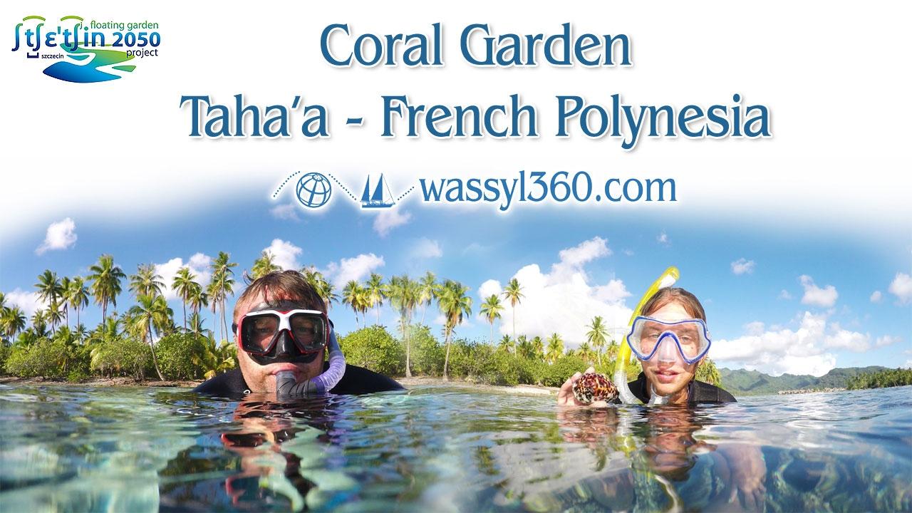 Coral Garden Snorkeling - Amazing Underwater World - Tahaa - French  Polynesia - HD
