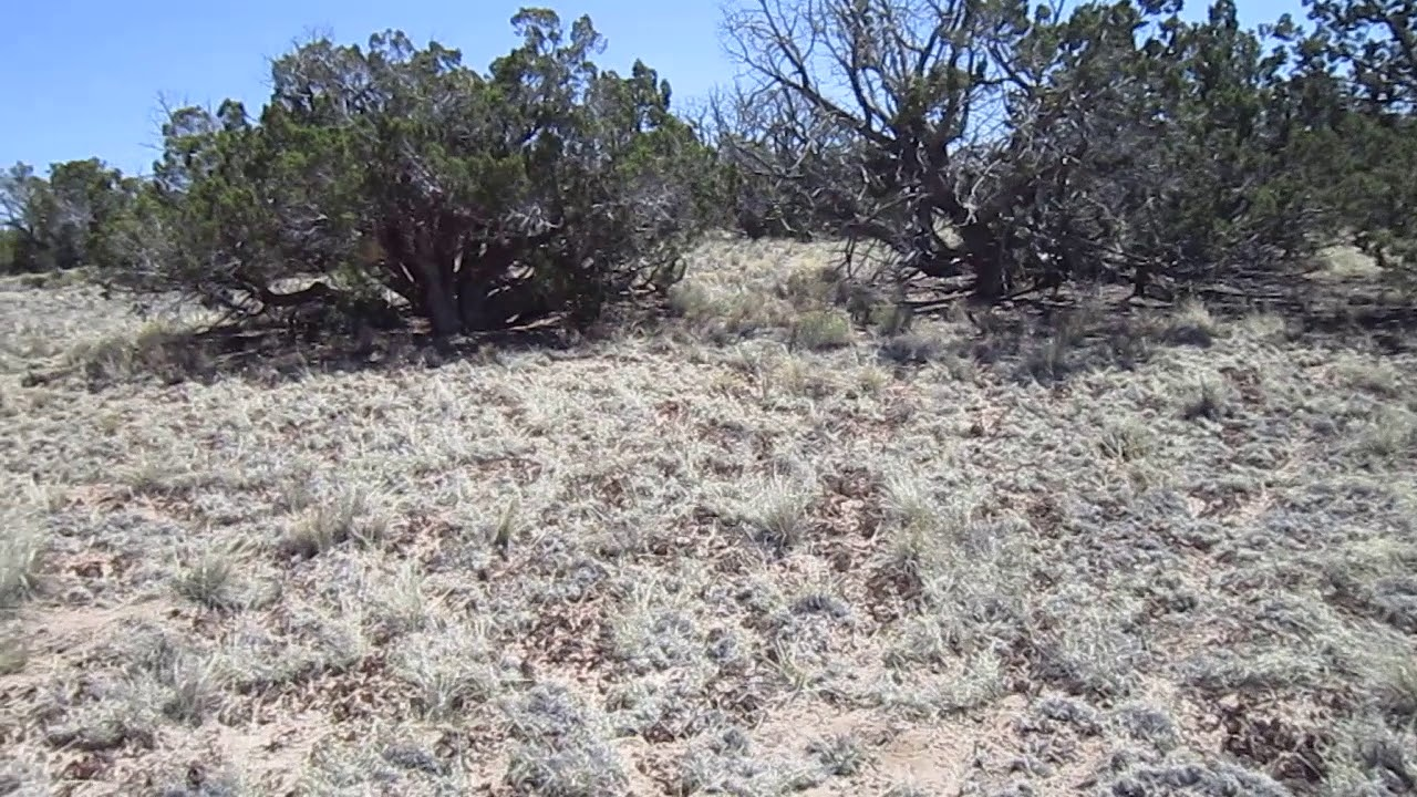 40 Acres near St. Johns in Apache County