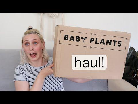 I SPENT £75 ON BABY PLANTS | Online Baby Plants Haul