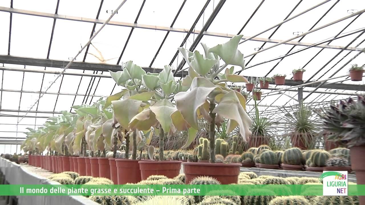 Il mondo delle piante grasse e succulente prima parte for Piante grasse succulente