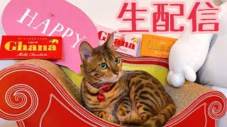 【生配信2/14】バレンタインですが猫でも見ませんか?生配信(クロちゃんの進捗を少し話します)