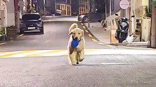 혼자 산책하는 강아지