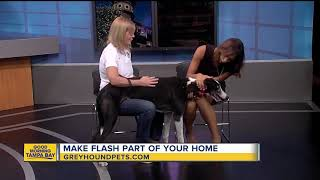 Rescues in Action Sept. 16: Flash needs furever home