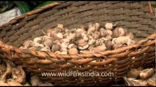Women peeling areca nuts
