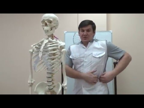 Косые мышцы живота болят